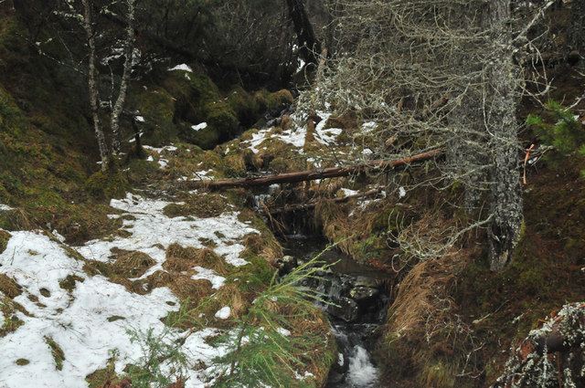 Stream in Lochletter Forest