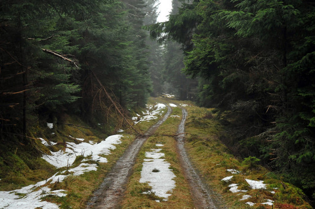 Near the end of the forest track