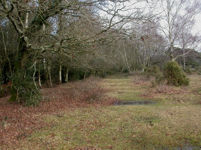 Wootton, forestry boundary