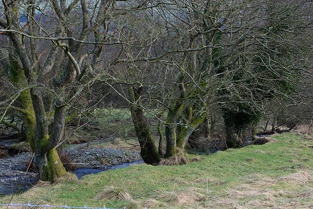 Small stream heading for the Wye / Gwy