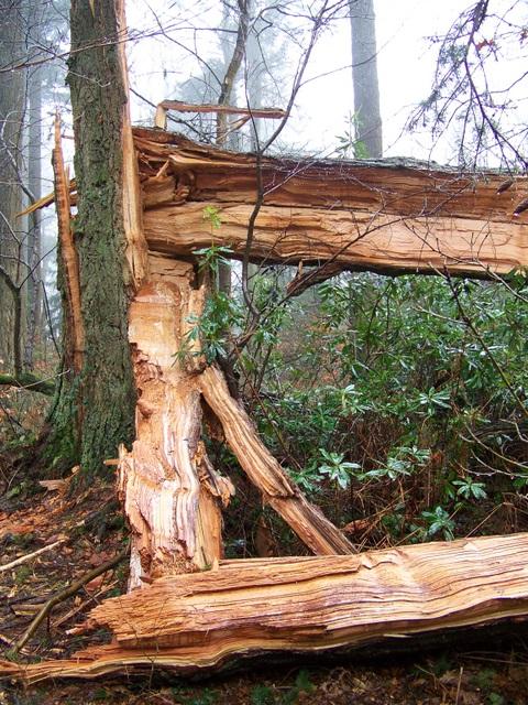 Poor broken tree, Heaven's Gate