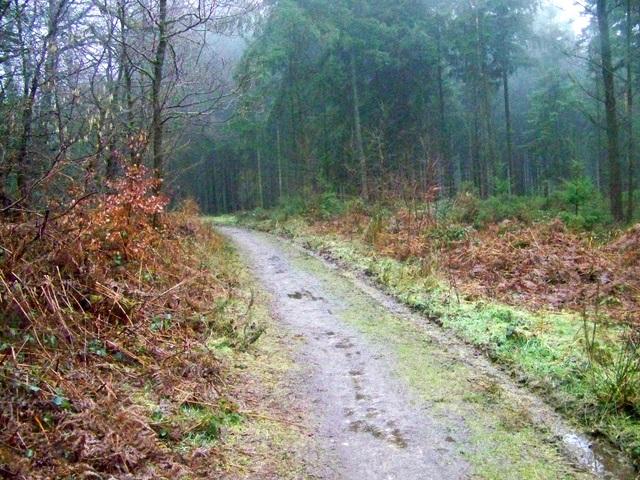 Woodland track near Heaven's Gate