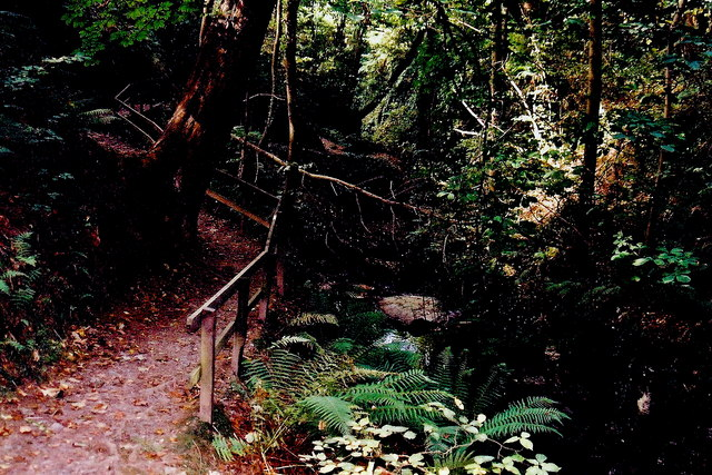 Glen Maye - Descending footpath below gorge