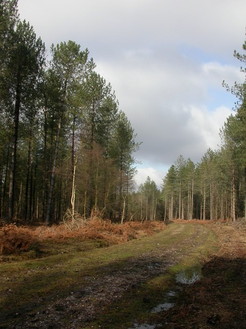 Little Wootton Inclosure