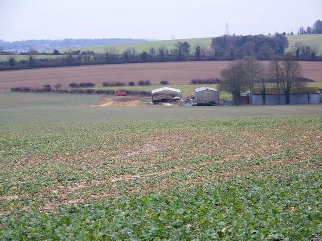 Root crops near Homington