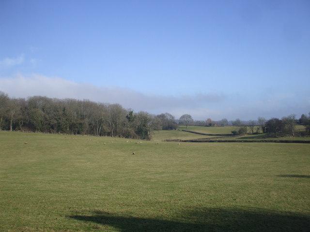 Pasture near Llanvaches