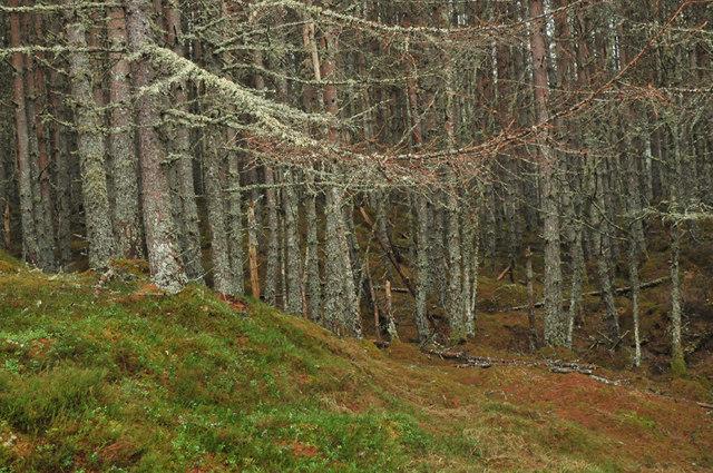 Woodland in Glen Cannich
