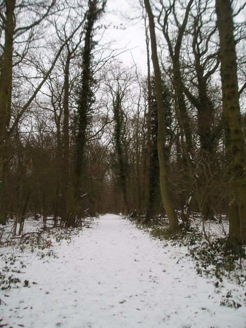 King's Wood in the snow