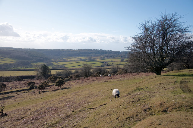 Moorland grazing - Dousland