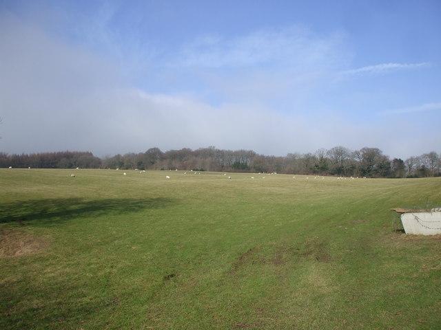 Pasture near Mynydd Alltir-fach