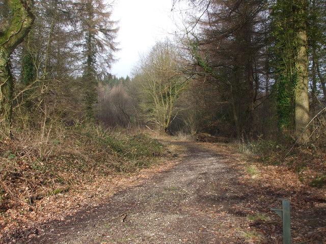 Woodland track, Wentwood