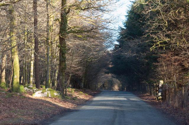 Road through Leathertor Plantation - Dartmoor