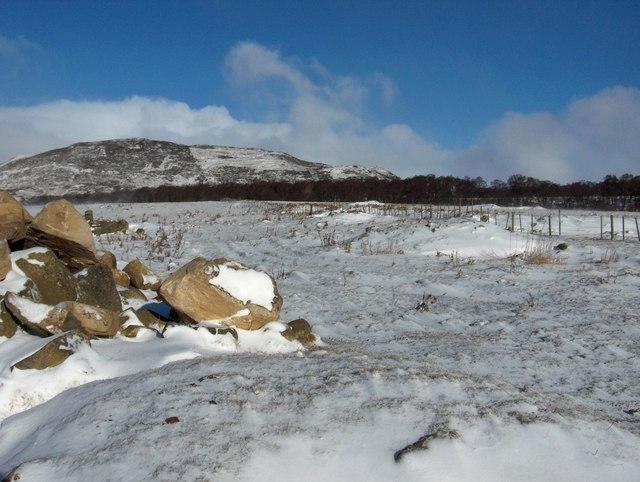 Moorland  above Kincraig