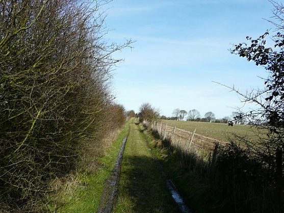 Track between Braeside Farm and Lone Barn Farm