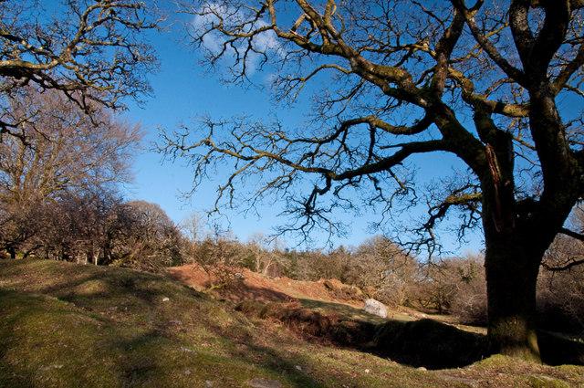 Woodland scrub by Norsworthy Bridge - Dartmoor