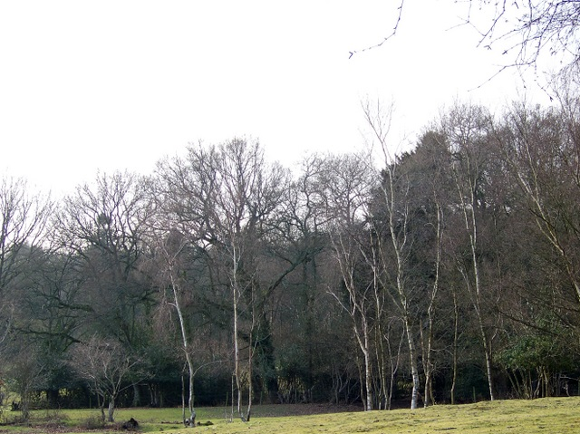 Woodland near Woodlands