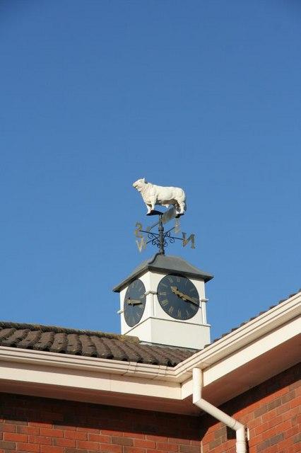 Bull on the clock