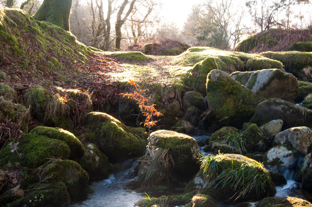 Moss covered boulders beside the River Meavy - Dartmoor