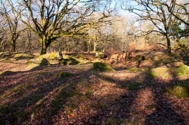 Moorland wood at Norsworthy Bridge - Dartmoor