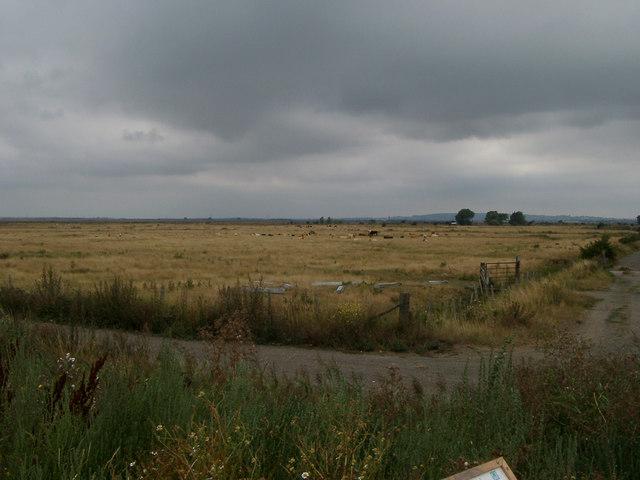 Redham Mead grazing marsh