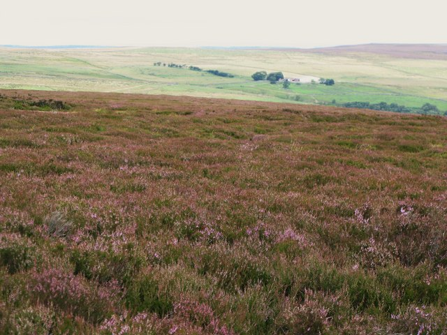 Moorland north of Black Hill (2)
