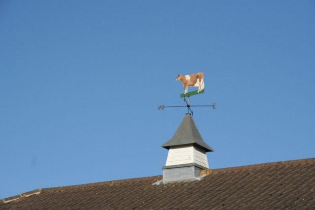 Cow on the weather vane