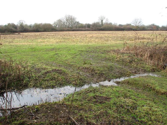 View across meadow towards railway line