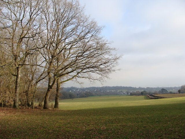 Field, at the edge of Wallwern Wood