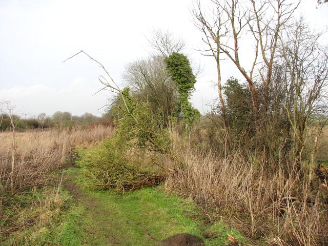 Path beside a ditch
