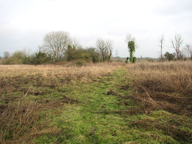 Path traversing meadow