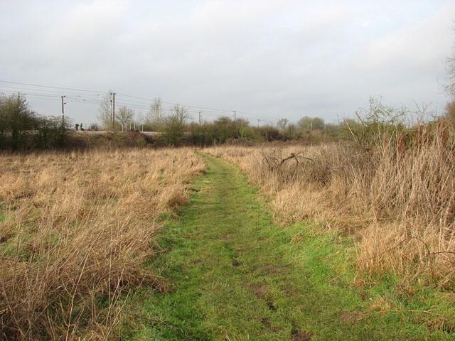 Footpath traversing meadow