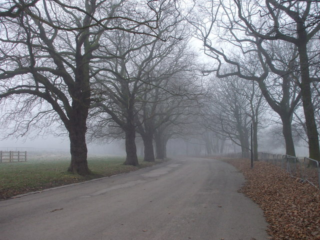 Avenue in Sefton Park