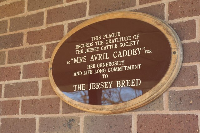 The Jersey  Breed
