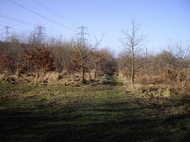 Footpath to Spring Woods Belsead Brook Park