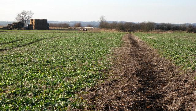 Footpath towards Sadney Farm