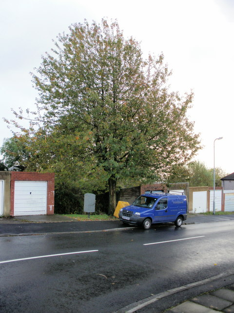 Joinery van alongside tree, Brynglas Avenue