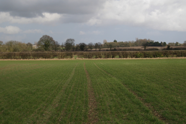 Looking northeast to the next hedge
