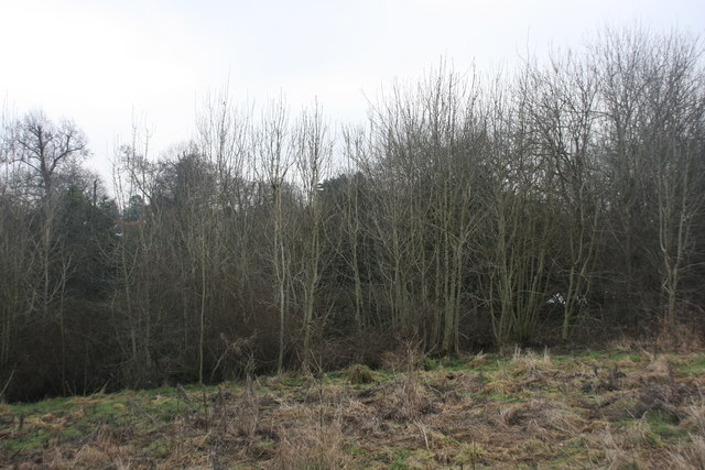 Woodland on the edge of Forest Row