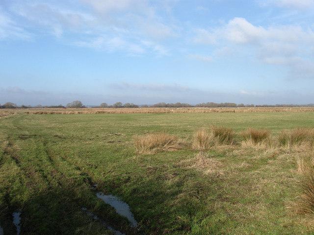 Upper Marsh