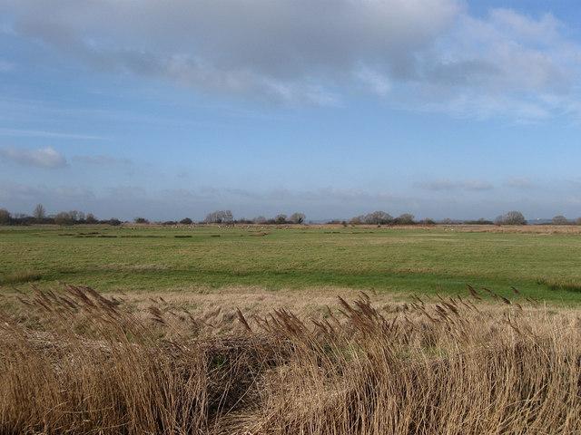 Lower Marsh