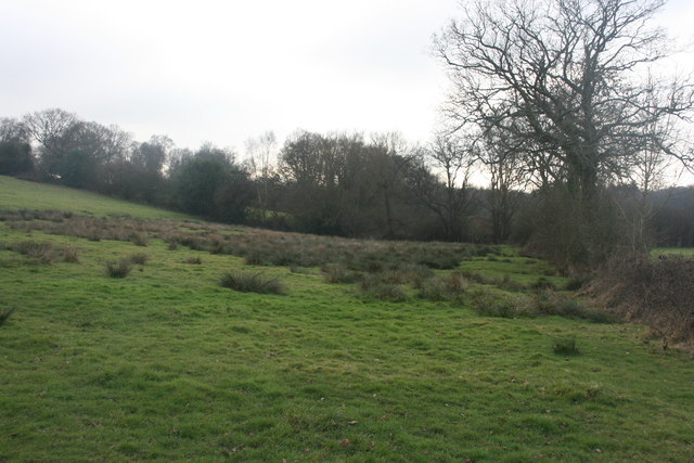 Boggy field near Burnthouse Farm