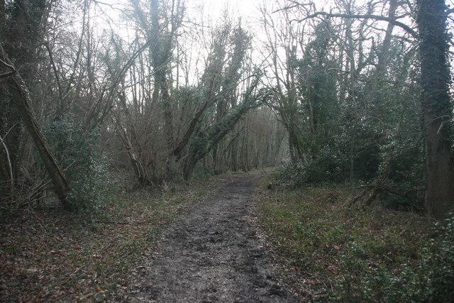 Bridleway, Alder Wood