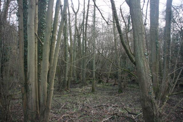 Alders, Alder Wood