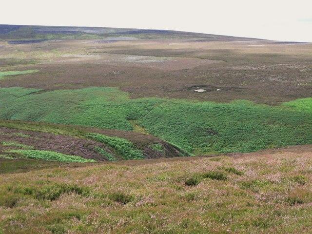 Moorland above Eudon Burn