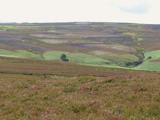 Moorland and lone tree above Eudon Burn