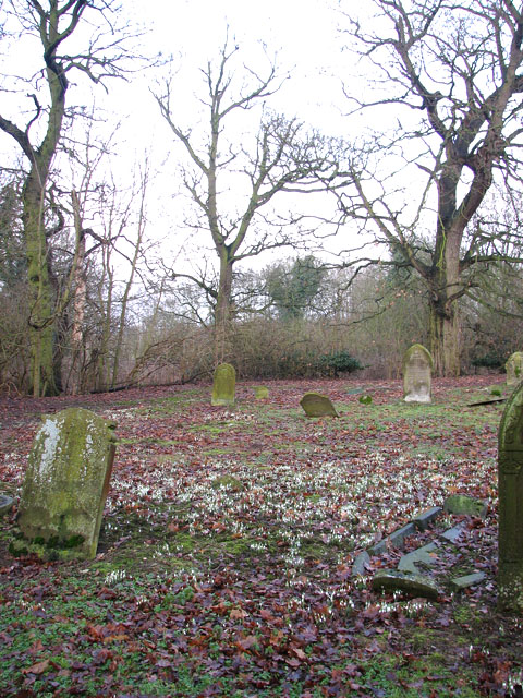 Snowdrops in St Mary's churchyard
