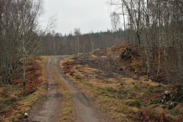 Track in Muirton Wood
