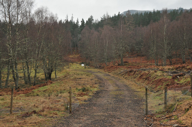 Track and gate in Muirton Wood