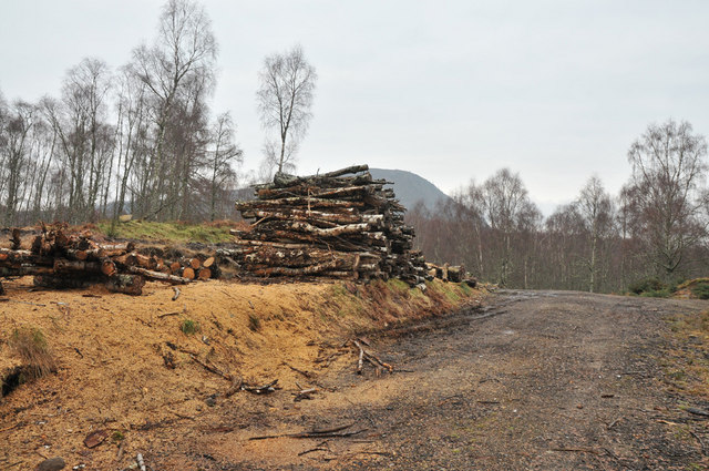 Stacked logs in Muirton Wood