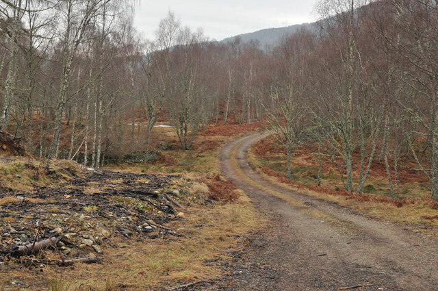 Track in Muirton Wood